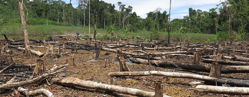 Deforestation in Amazonia (Peru).